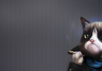 цитаты про кота